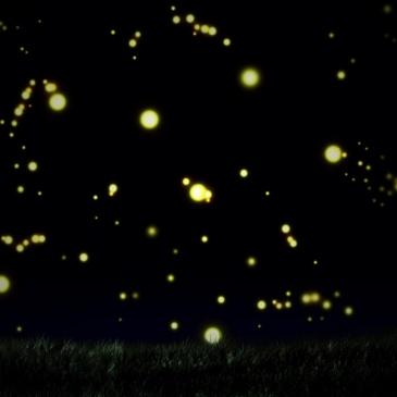 noche de luciernagas